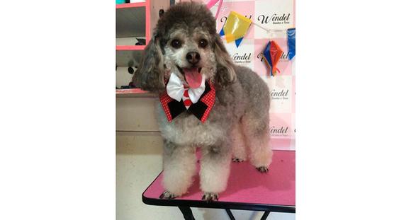 Banho para cães (até 10kg) + Limpeza de Ouvido e Dentes + Corte de Unhas