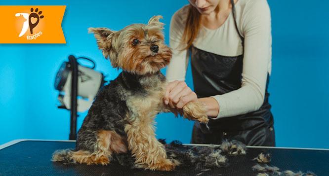 Banho e Tosa higiênica (cães até 10 Kg) no JP Rações & Pet Shop